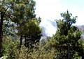 Brigadistas controlan incendio forestal que amenazaba la cabecera municipal de Guadalupe y Calvo