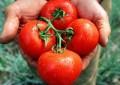 El tomate y el gas, culpables de la inflación récord: Inegi
