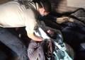 Paramedicos de P.C. en Allende, atienden parto en vivienda