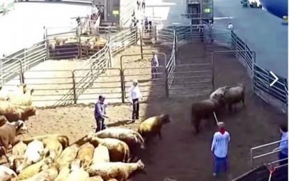 César Duarte robó hasta vacas de programas para ganaderos
