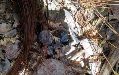 GALERÍA: Operativo de rastreo en Urique; hallan fragmentos óseos