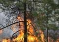 15 días de incendio consume 13 mil Has en Madera