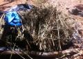 Aseguran y destruyen 34 kilos de droga en Atascaderos