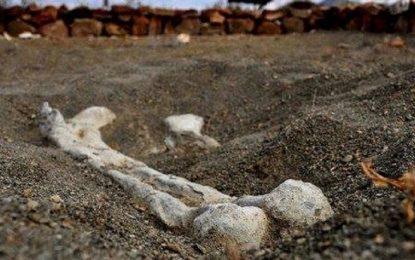 Localizan 8 restos óseos en comunidad de Gpe y Calvo