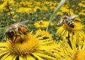México vive situación apocalíptica por pérdida de mil 600 millones de abejas