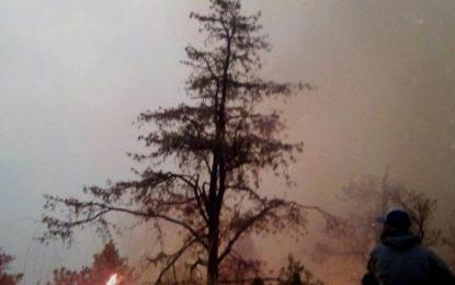 Consume incendio bosques del municipio de Guerrero