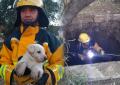 Rescatan a perrito en las Huertas; cayó a una noria de 17 mts