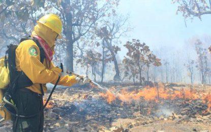104 incendios forestales en el año; Chihuahua entre afectados