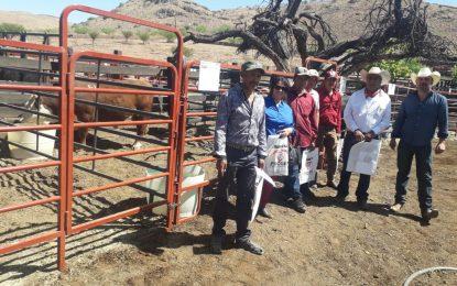 Fortalecen programa de mejora genética ganadera en Guadalupe y Calvo