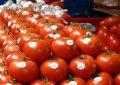 EUA elimina aranceles al tomate mexicano