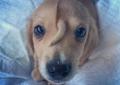 Rescatan en Missouri a perro con cola en la frente