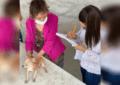 """Beneficia """"Juventud que Trabaja por El Oro"""" a 250 mascotas con campaña de desparasitación"""