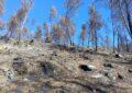 Devastan mafias los bosques