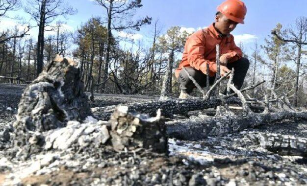 Combaten y liquidan 580 incendios en el territorio estatal