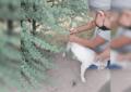 Dejan a un perrito amarrado y abandonado en la Av. Centauro; lo liberan policías