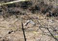 Encuentran restos humanos en Ejido el Táscate