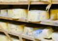 Destruye Coespris 10.6 toneladas de queso contaminado en, región Cuauhtémoc